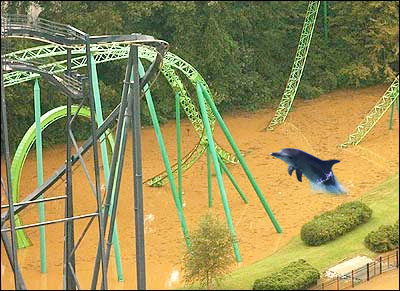 dolphin_six_flags